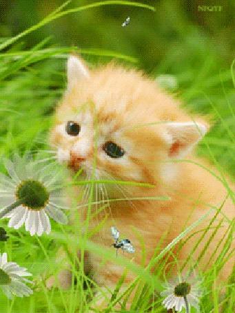 Анимация Котенок на природе среди цветов и летающих насекомых (© qalina), добавлено: 12.08.2015 20:17