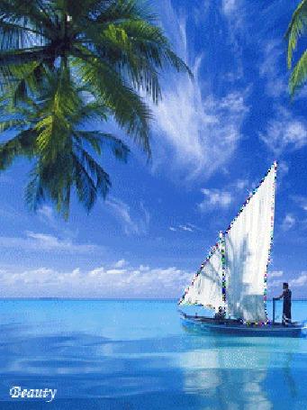Анимация Лодка на фоне моря, пальмы и голубого неба / Beauty/ (© qalina), добавлено: 12.08.2015 20:23