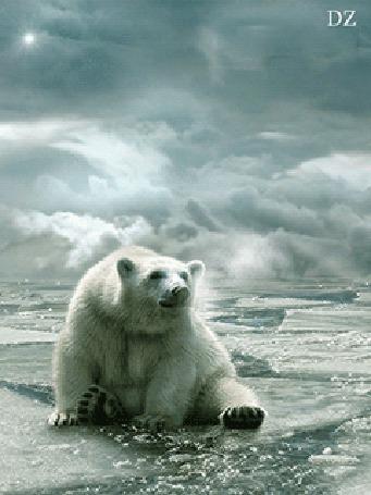 Анимация Белый медведь сидит на льдине на фоне облачного неба и солнечных лучей, автор ДЗ (© qalina), добавлено: 13.08.2015 20:01