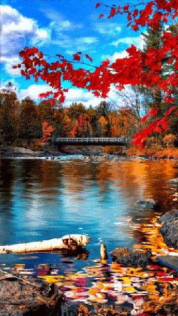 Анимация Мост через реку в буйстве красок осеннего леса (© царица Томара), добавлено: 18.08.2015 16:03