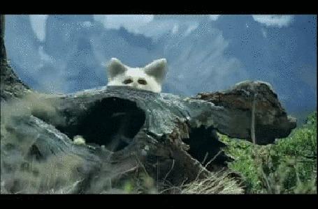 Анимация Живые зверьки Wofty - это виртуальная живность, разработанная рекламным агентством CLM BBDO для рекламной кампании Freedent идут по стволу упавшего дерева и один из них заглядывает в объектив камеры (© Akela), добавлено: 20.08.2015 03:57