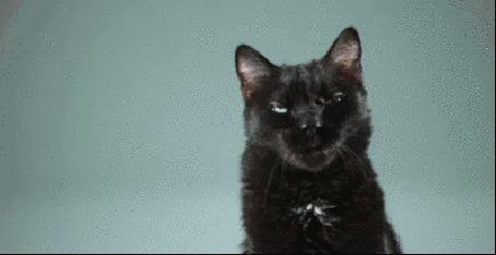 Анимация Черный кот и черная пантера пугают друг друга жестами и мимикой (© Akela), добавлено: 20.08.2015 04:19