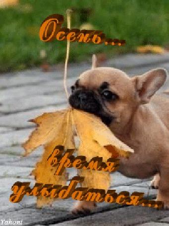 Анимация Собачка с желтым листком в зубах / Осень время улыбаться / Yahont/ (© qalina), добавлено: 22.08.2015 10:55