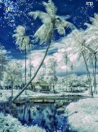 Анимация Пальмы в зимнее время года на фоне реки и неба / снп/