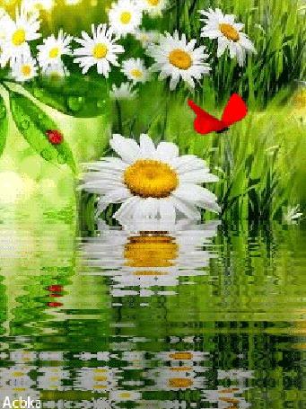 Анимация Красивые ромашки на фоне речки бабочки и божьей коровки / Acbka/