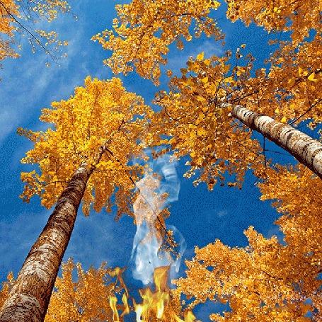 Анимация Осенние желтые листья падают в костер (© Миропия_Мира), добавлено: 22.08.2015 13:13