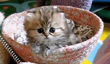 Анимация Милый пушистый котенок
