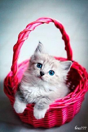 Анимация Маленький котенок в корзине (© zmeiy), добавлено: 29.08.2015 09:45