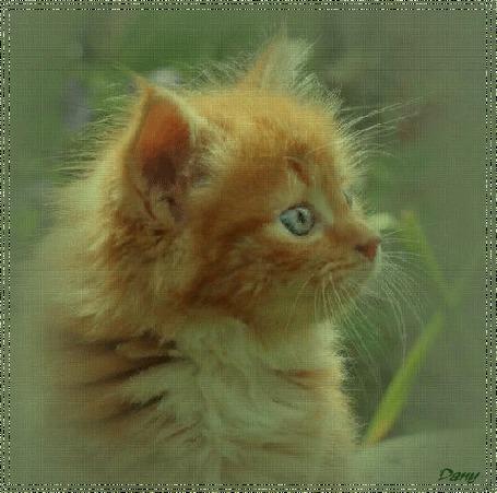Анимация Маленький рыжий котенок (© zmeiy), добавлено: 06.09.2015 19:00