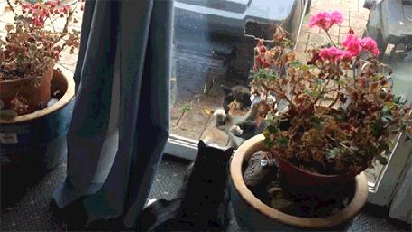 Анимация Два кота пытаются затеять драку через стекло (© Anatol), добавлено: 07.09.2015 00:11