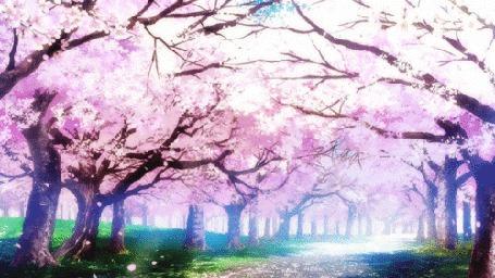 Анимация Лепестки с цветущей сакуры в саду падают на аллею (© Solist), добавлено: 07.09.2015 12:43