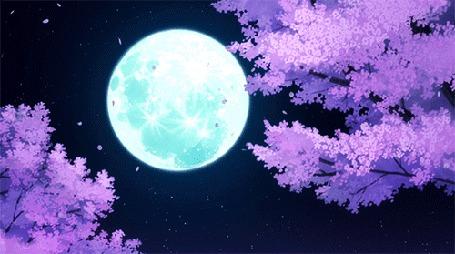 Анимация Лепестки цветов с сакуры летят на фоне ночного неба с полной Луной