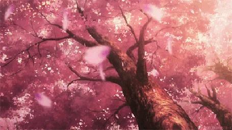 Анимация Большое цветущее дерево сакура с падающими лепестками (© Solist), добавлено: 07.09.2015 12:52
