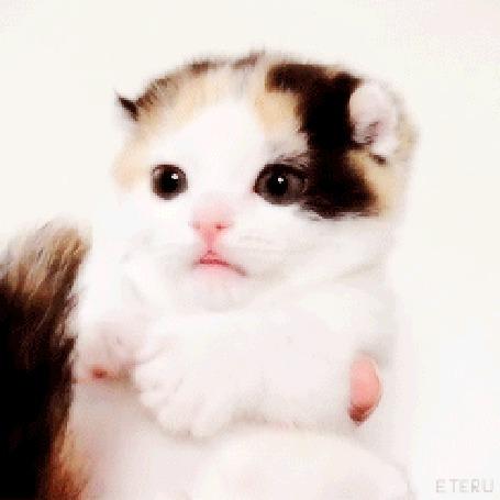 Анимация Милый котенок облизывает свой хвост (© JeremeVoods), добавлено: 08.09.2015 03:36