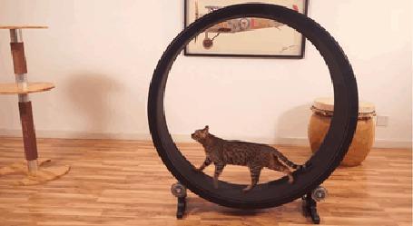 Анимация Кошка бегает в беговом колесе One Fast Cat (© Anatol), добавлено: 12.09.2015 01:13