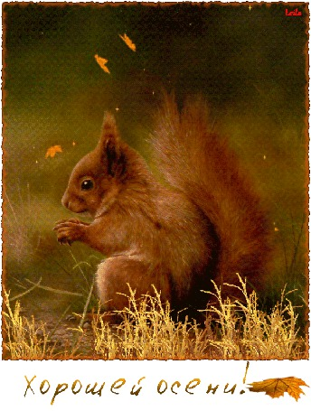 Анимация Белка сидит в траве под падающими осенними листьями (Хорошей осени!) Leila (© Natalika), добавлено: 12.09.2015 09:43