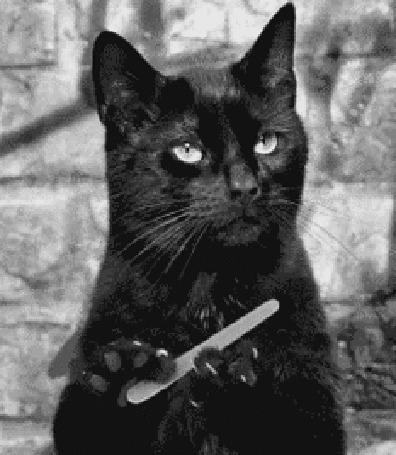 кухня вполне гифка черная кошка пилит ногти исследовать знакомые