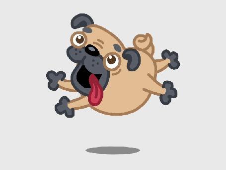 Анимация Скачущий мопс с высунутым языком (© Solist), добавлено: 14.09.2015 14:51