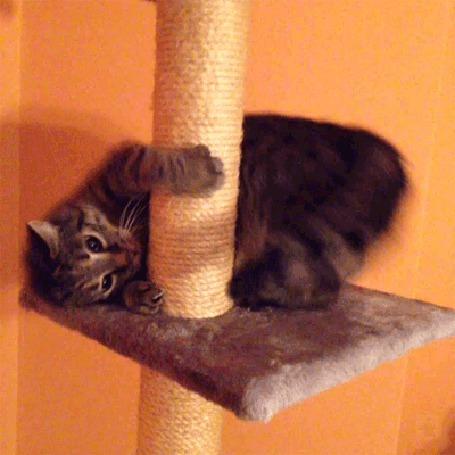 Анимация Кот крутится вокруг когтеточки (© JeremeVoods), добавлено: 16.09.2015 04:10
