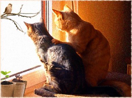 Анимация Кот чешет кошке спинку глядя в окно на птичку (© irina.marianna1), добавлено: 16.09.2015 09:47
