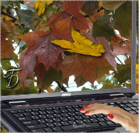 Анимация Осенние листья падают с экрана монитора на клавиатуру, на которой лежит женская рука с красным маникюром, надпись Бродит Осень по душе, автор Ольга П (© Solnushko), добавлено: 16.09.2015 17:49