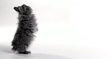 Анимация Милый серый кролик на белом фоне