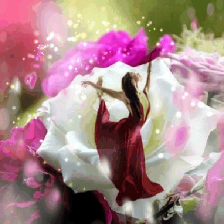 Анимация Девушка в танце на фоне роз (© zmeiy), добавлено: 21.09.2015 21:29