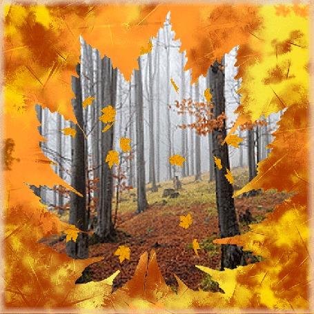 Анимация Падающие осенние листья в лесу (© Миропия_Мира), добавлено: 23.09.2015 07:07