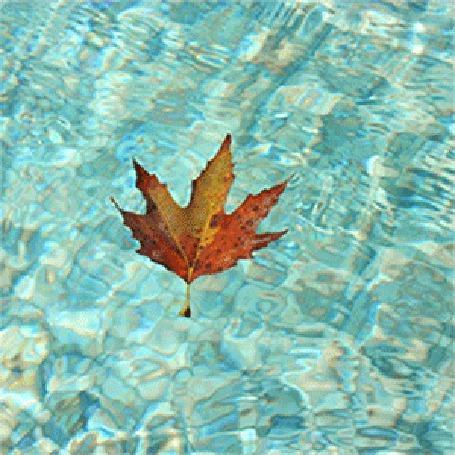 Анимация Осенние листья падают на воду и опускаются на дно (© Миропия_Мира), добавлено: 23.09.2015 07:09