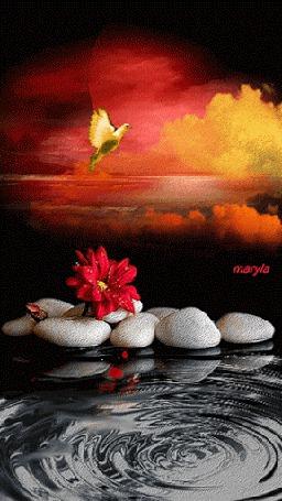 Анимация Желтый голубь машет крыльями над красным цветком, лежащем на белых камнях у водоворота, maryla (© lubiklove), добавлено: 23.09.2015 16:42