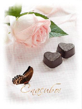 Анимация Нежная розовая роза, бабочка на надписи, шоколадные сердечки, (Спасибо!) автор lady serafima (© Solnushko), добавлено: 25.09.2015 13:18