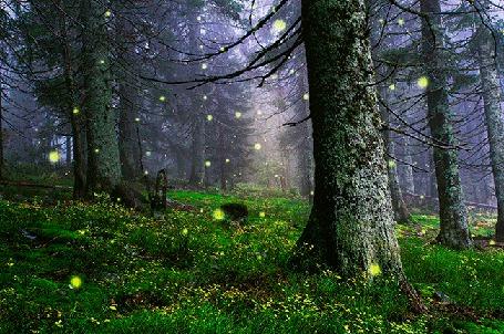 Анимация Таинственные светящиеся точки в лесу (фото Антона Горлина Ведьмин лес) (© Миропия_Мира), добавлено: 25.09.2015 14:52
