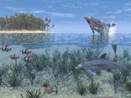 Анимация Один дельфин выныривает из воды, а другой плывет рядом в прозрачной толще моря (© Ловетта), добавлено: 04.10.2015 17:04