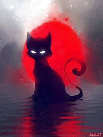 Анимация Красная луна позади кота, сидящего в воде, Lola31 (© МилаДЖИ), добавлено: 06.10.2015 12:24