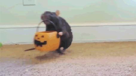 Анимация Мышка собирает свою дань на Хеллоуин (© Anatol), добавлено: 06.10.2015 21:24