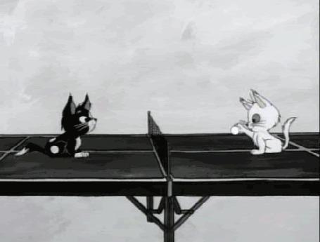 Анимация Рисованные котята играют в теннис