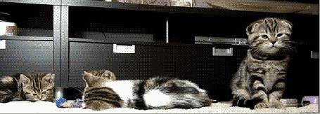 Анимация Сонные котятки сидят на ковре, внезапно, их что–то напугало и они разбегаются кто куда, мама кошка, в недоумении, смотрит по сторонам (© МилаДЖИ), добавлено: 09.10.2015 22:38