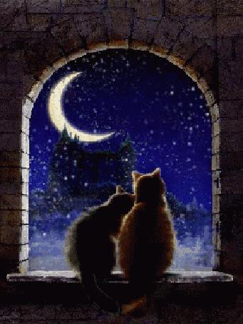 Анимация Влюбленная пара котов смотрит на падающий снег (© JeremeVoods), добавлено: 10.10.2015 13:50