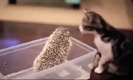Анимация Первое знакомство котенка и ежика (© Георгий Тамбовцев), добавлено: 11.10.2015 15:46