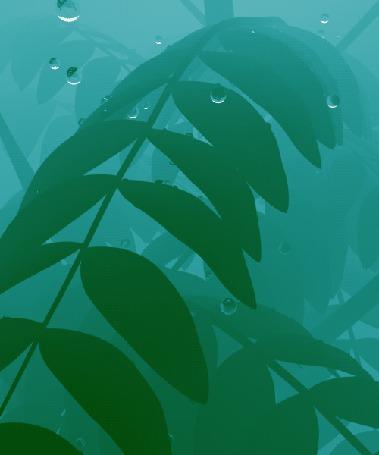 Анимация Капли дождя падают на ветки