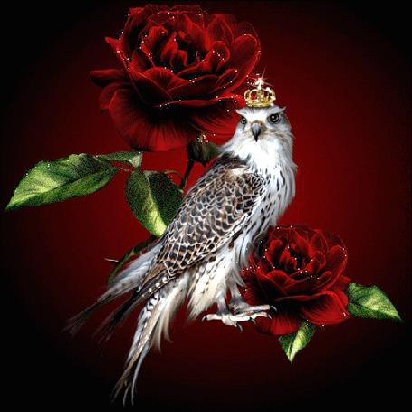 Анимация Птица в короне между розами