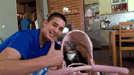 Анимация Коту не понравилось, что с ним делают селфи, за что хозяин и был наказан (© Anatol), добавлено: 15.10.2015 20:28