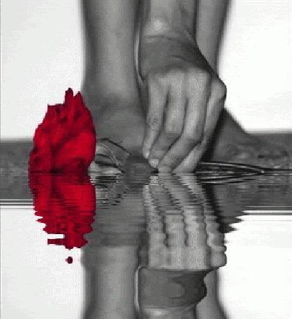 Анимация Красная роза в руке лежит в воде (© zmeiy), добавлено: 17.10.2015 00:29