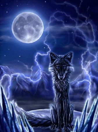 Анимация Черный волк сидит на фоне ночного неба с полной Луной