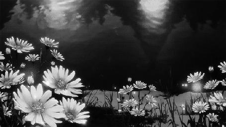 Анимация Цветы растущие у воды (© Arinka jini), добавлено: 18.10.2015 14:13