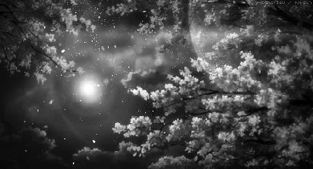 Анимация Ветки деревьев на фоне ночного неба и луны (© Arinka jini), добавлено: 18.10.2015 14:24