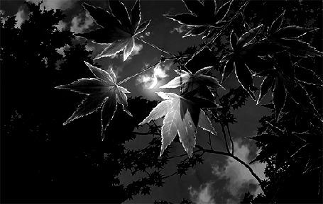 Анимация Листья на фоне плывущих облаков
