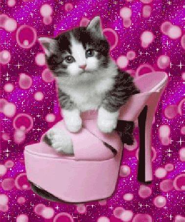 Анимация Милый котенок сидит в розовой женской босоножке