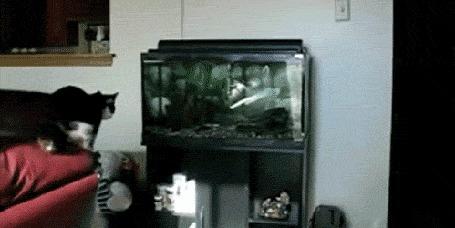 Анимация Кошка прыгает к рыбкам в аквариум, но не удерживается и падает