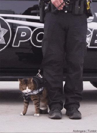 Анимация Кот решил уйти со службы в полиции (© Anatol), добавлено: 20.10.2015 22:50